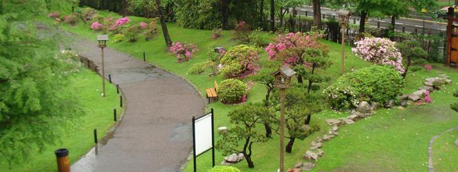 plantas para jardim japones , com lagos, cachoeiras, carpas e dezenas