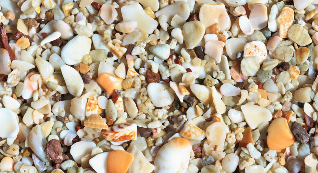 Concheiro - Praia do Cassino